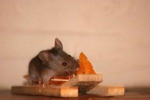 سمپاشی منازل ، سمپاشی موش ، سمپاشی سوسک ، سمپاشی ساس
