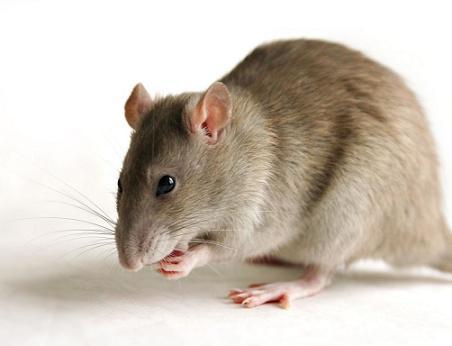 سمپاشی موش ، سمپاشی ، سمپاشی منازل ، سمپاشی در تهران