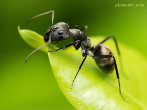 سمپاشی مورچه ، سمپاشی موریانه ، موریانه ، مورچه