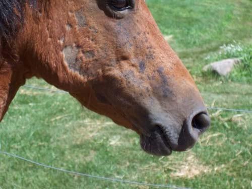 سمپاشی پشه خاکی،اثر نیش پشه بر اسب،سمپاشی اسطبل،سمپاشی اصولی پشه،سمپاشی پشه خاکی در منازل،سمپاشی پشه در بیمارستانها