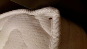 ساس تختخوابی،سمپاشی ساس،سمپاشی اصولی ساس،سمپاشی ،سمپاشی موش