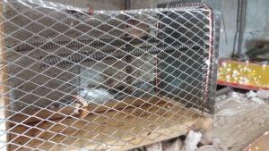 موش و انواع موش ها،سمپاشی اصولی موش،طعمه گذاری اصولی موش،سمپاشی ادارات و کارخانجات،سمپاشی سوسک فاضلاب،سمپاشی منازل در تهران