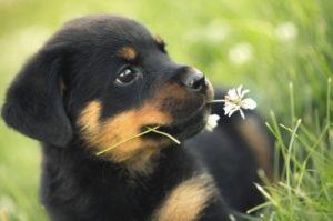 سگ و انسان،سگ حیوان خانگی،بیماریهای منتقله از سگ،سمپاشی سگ،سمپاشی منازل،سمپاشی کنه،سمپاشی کک،سمپاشی،سمپاشی اداره و سازمان ها