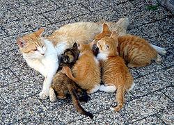 گربه ها،گبه حیوان خانگی،گربه و بیماری ها،گربه ناقل بیماری،گربه دوست داشتنی،سمپاشی کک،سمپاشی کنه،سمپاشی