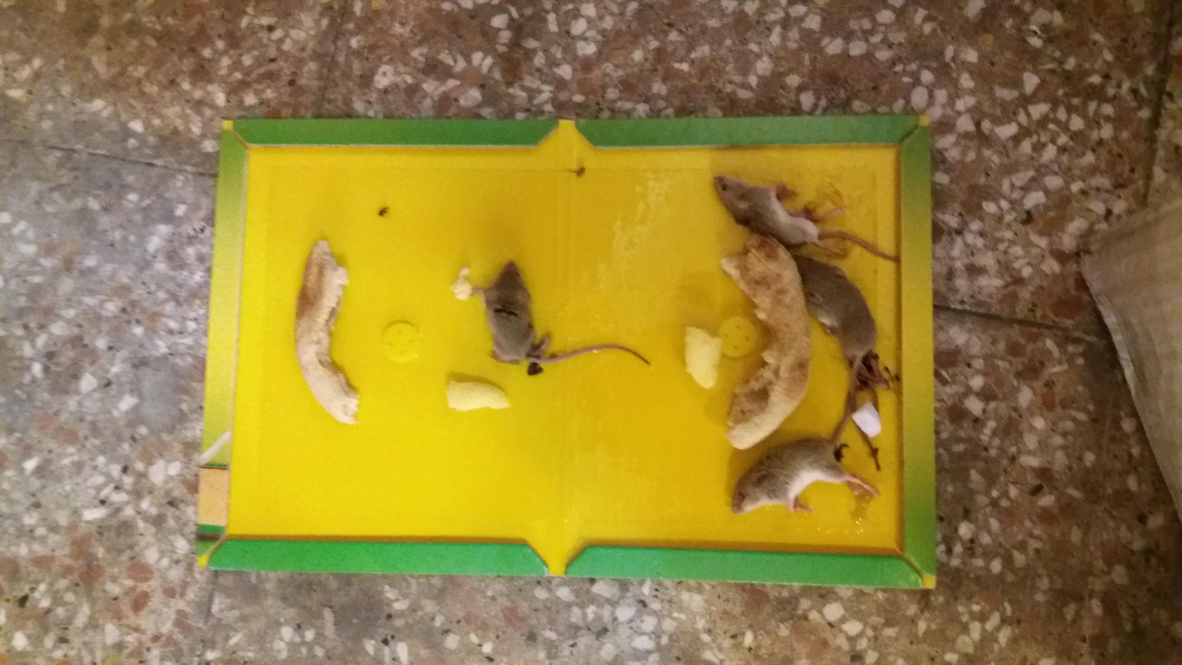 سمپاشی حیوانات،سمپاشی،سمپاشی جوندگان،سمپاشی موش،سمپاشا منازل،طعمه گذاری موش