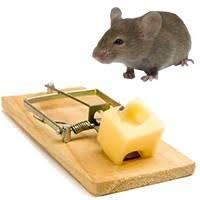 تله گذاری موش