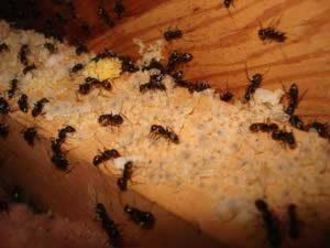 رهایی از شر مورچه ها
