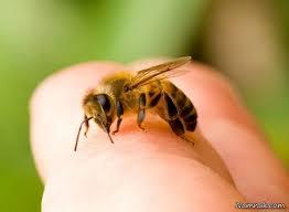 گزش زنبور