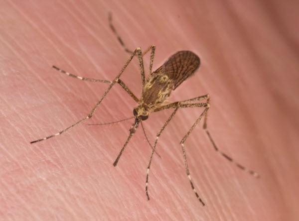 جذب پشه ها ، پشه ها و گروه خونی، موارد جذب کننده پشه ، موارد جذب کننده حشرات ، دلایل جذب حشرات به انسان، تعریق و جذب حشرات ، دی اکسید کرین و جذب پشه ها