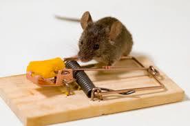 اهمیت بهداشتی و کنترل جوندگان ، روشهای مبارزه با موش ها ، حفاظت ساختمان ها در برابر نفوذ و پرورش موش ها ، اهمیت بهداشتی موش ها ، مبارزه با موش ها ، بیماری های مشترک انسان و حیوان ، بیماری های مشترک انسان و موش