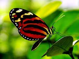 فواید حشرات ، فایده حشرات ، اهمیت حشرات ، سودمندی حشرات ، حشرات چه فوایدی دارند ، حشرات چه اهمیتی دارند ، اهمیت حشرات در زندگی