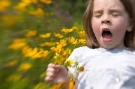 گرده گیاهان ، عوامل آلرژن و حساسیت زا ، آسم ، گرده افشانی و حسااسیت ، آلرژی ، حساسیت ،