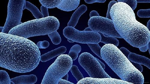 آنتروباکتریاسه ها ، میکروارگانیسم های مهم در بهداشت مواد غذایی ،میکرو کوک ، س=لاکتوباسیلاس ها ، سالمونلاها ، شیگلاها ، کلیفرمها ، پروتئوسها ، میکروب های دستگاه گوارش ، بهداشت مواد غذایی ، میکروب عامل اسهال ، میکروب عامل عفونت دستگاه گوارش ، میکروب موجود در گوشت مرغ فاسد