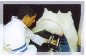 بهداشت شیر ، کیفیت شیر ، میکرو ارگانیسم ، حمل شیر ، شیر گاو ،