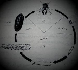 روشهای کنترل مگس خانگی،سمپاشی مگس