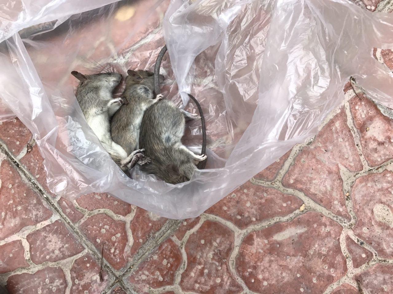 طعمه گذاری کارخانه برای موش،طعمه گذاری تخصصی موش،طعمه گذاری موش در غرب تهران