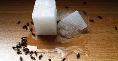 سمپاشی تخصصی مورچه،روش مبارزه با مورچه،سمپاشی مورچه